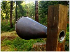 Wie man in den Wald hinein ruft...