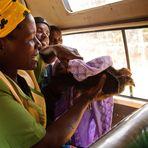 Wie man mit Hühnern im Minibus reist