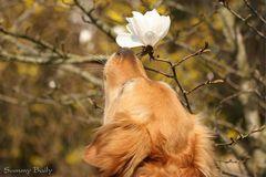 Wie riecht der Frühling?