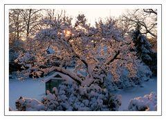 Wie schön der Winter bei uns mal ausgesehen hat ...