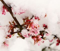 Wie verabredet trifft sich Schnee mit Schneeball