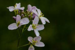 Wie vielfältig doch die Blühenden Wiesen sind...