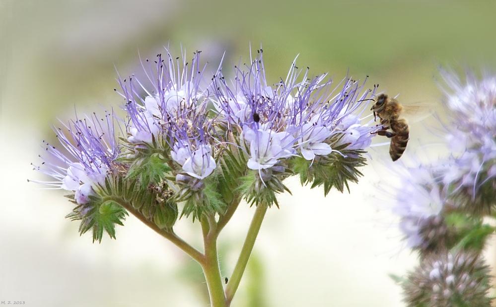 Wie war jetzt das schon wieder mit den Bienen und den Blümchen ;)?