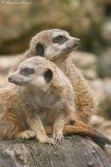 Wie, was, wo - Besucher aus Norddeutschland im Tierpark Eisenberg??