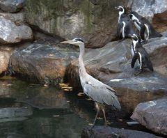 Wie? Weg da ! Du bist kein Pinguin !!