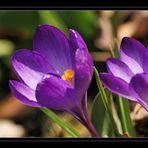 Wie weit ist der Frühling ?