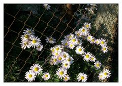 Wie wir Menschen wollen auch die Blumen ans Licht ;-)