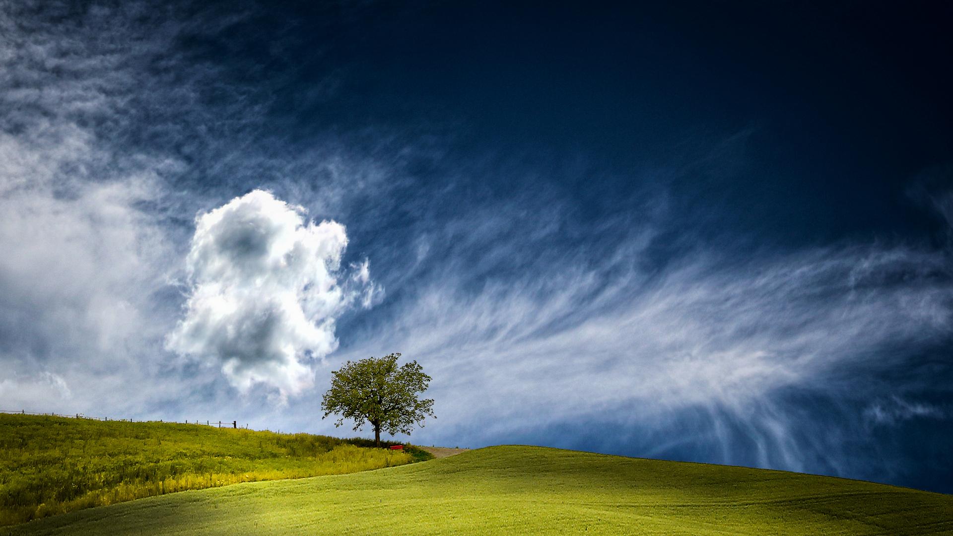 Wieder ein Baum