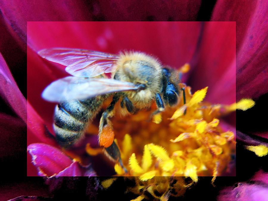 Wieder mal ein Bienchen