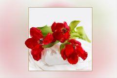 wieder Tulpen