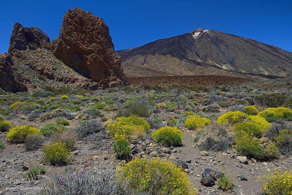 Wiedersehen mit dem Teide