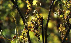 ... Wiener Herbsteindrücke (13)