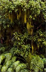 wie`s im subtropischen regenwald neuseelands so aussieht #1