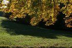 Wiese mit Herbstzeitlosen im Lainzer Tierpark