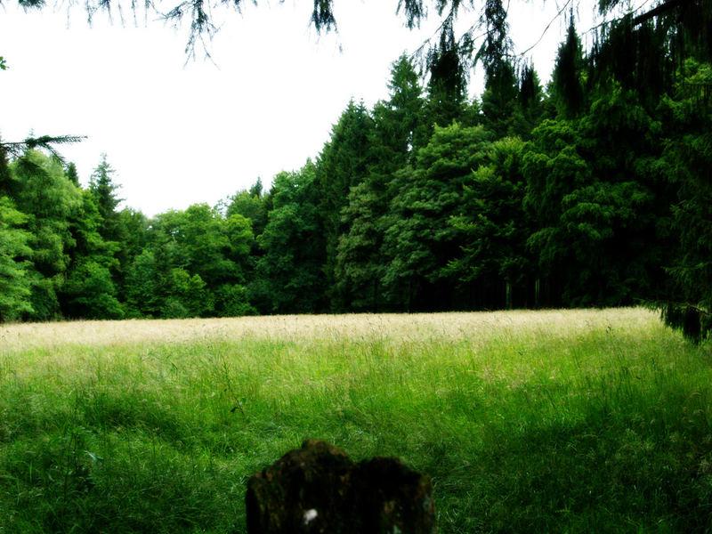 Wiese mit Wald