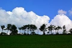 Wiese – Waldrand – Wolken …