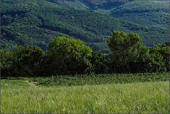 Wiese, Weingarten und Wienerwald