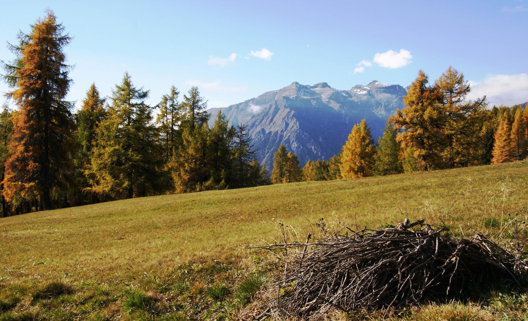 Wiesen - Lärchen - Berge