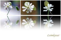 Wiesenblümchen