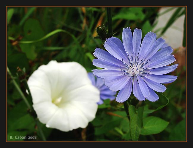 Wiesenblumen im Kontrast