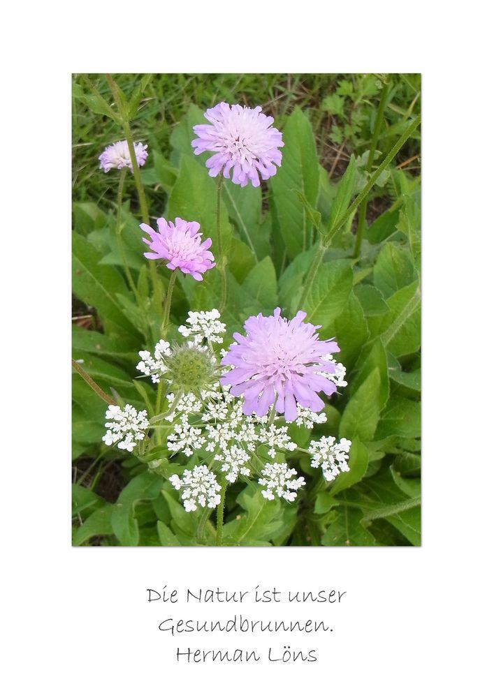 Wiesenblumen mit Zitat