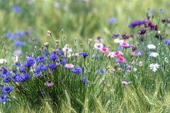 Wiesenblumenfeld