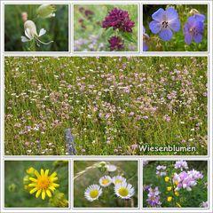 Wiesenblumengruß zum Wochenende