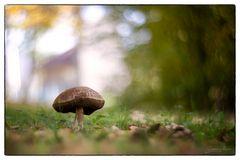 Wiesengemälde mit Pilz