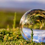 Wiesenglas