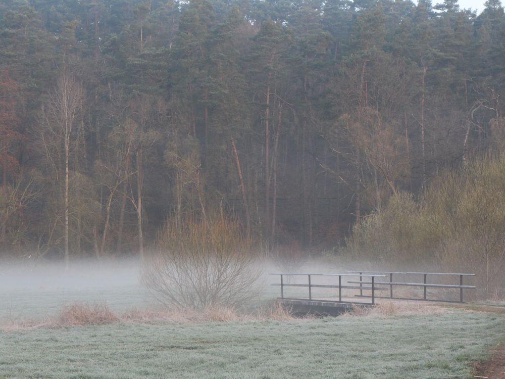 Wiesengrund im Morgenlicht