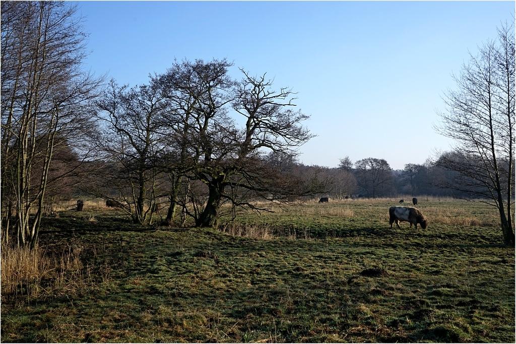 Wiesenland am Morgen