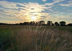 Wiesenlandschaft bei Sonnenuntergang