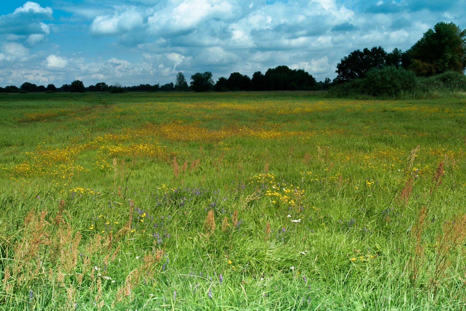 Wiesenlandschaft im Oderbruch