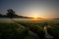 Wiesen:Nebel