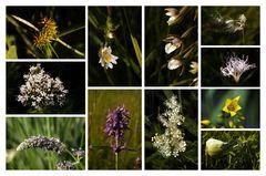 Wiesentracht - Meadow flowers