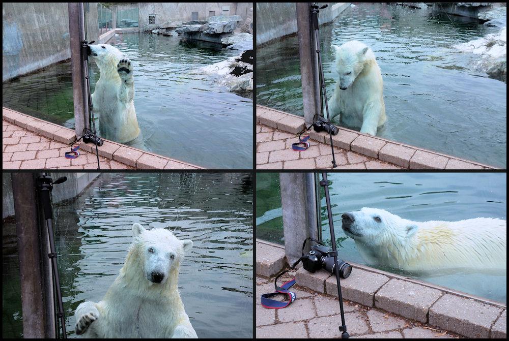 Wilbär hat Interesse an Fotografie