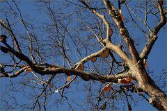 wild-bees-tree