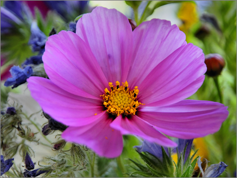 Wild Flower (1)