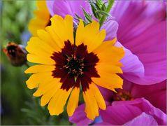 Wild Flower (2)