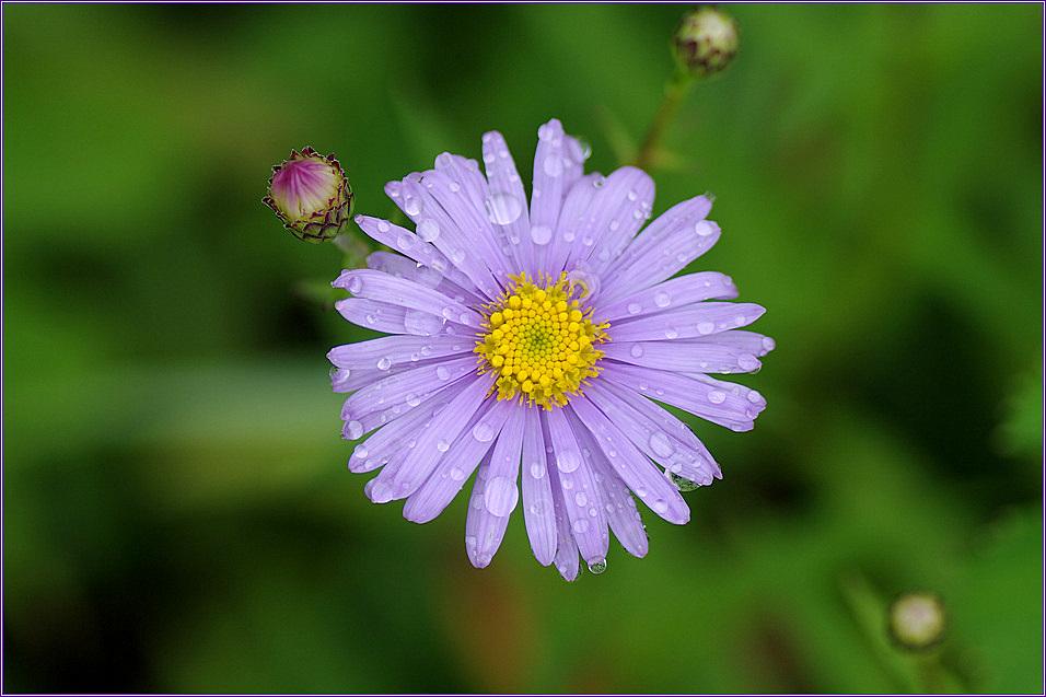 wild flower II