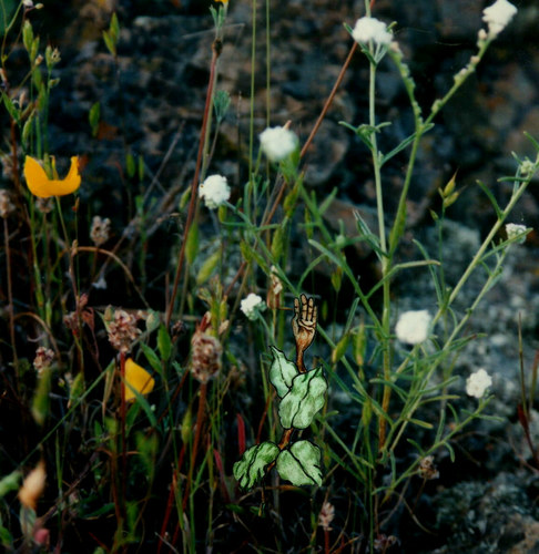 Wild Flowers and Mitt Weed