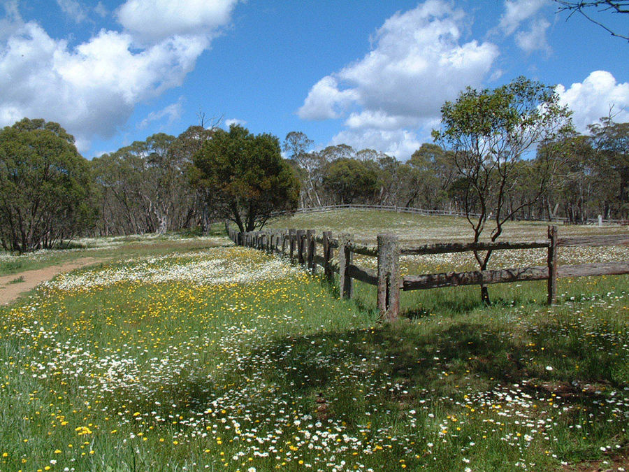 Wild Flowers in Ebor