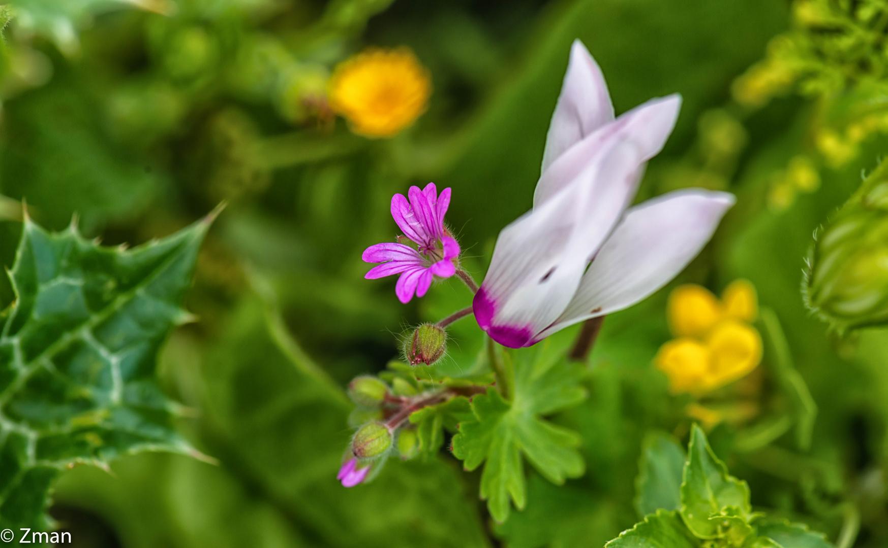 Wild Flowers PEO_5309-16