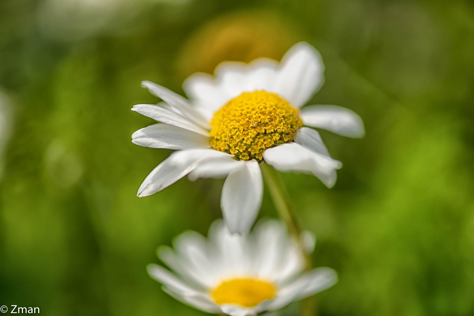 Wild Flowers SPO_5228-6
