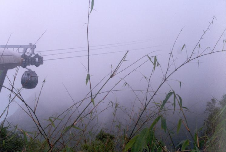 Wild grass in the mountain