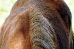 wild horses 4