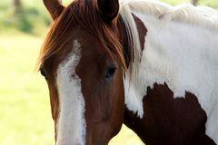 wild horses 5