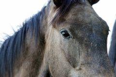 wild horses 6