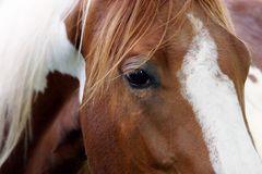 wild horses 8