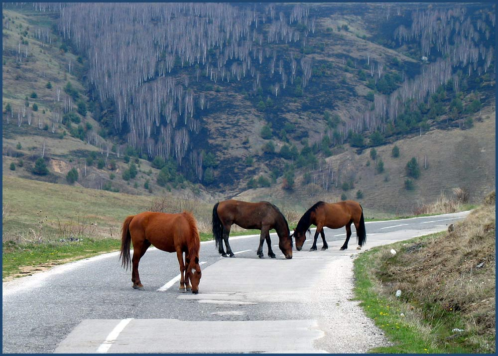 Wild Horses in Serbia - Part Two